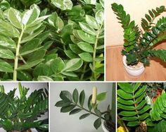 live house plants for sale Vegetable Garden, Garden Plants, Indoor Plants, Trees To Plant, Plant Leaves, House Plants For Sale, Purple Plants, Replant, Pallets Garden