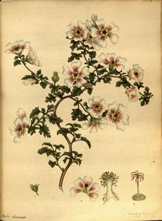 The botanist's repository ?for new, and rare pl...