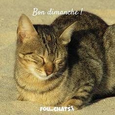 Bon dimanche à tous ! . # #chats #foudechats #instacat #instacats #ilovecats #cats #catlover #catlove #catsofinstagram #cateveryday #catoftheday #neko #amoureuxdeschats #fousdechats  #chat #bondimanche