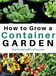 Want To Grow Food At Home A Container Garden Is A Great Way To Do