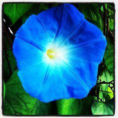 'blue flower' von Matthias Hennig bei artflakes.com als Poster oder Kunstdruck $16.63