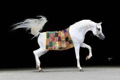 #horse #amandoria #arabian