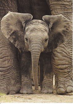 Baby elephant!                                                       …                                                                                                                                                     More