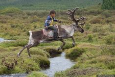 I Took Photos Of Adorable Kids With Their Reindeer In The Remote Taiga Mountains Of Mongolia Nature Animals, Animals And Pets, Cute Animals, Mongolia, Animal Photography, Landscape Photography, Scenic Photography, Night Photography, Landscape Photos