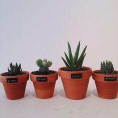 귀여운토분에 심어진 더귀여운 다육식물들 이번주 5월 30일 토욜 마켓에서 만날수있어요!  #컨테이너플리마켓  #토분 #토기 #다육식물 #다육이 #드테이블 #detableflower #DETABLE #드테이블플라워 #마켓