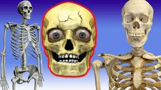 Skelton Finger Family Nursery english 3d  rhymes |  Children Animated fi...