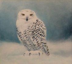 Ruth_Molloy Ireland, Places To Visit, Animals, Beautiful, Animales, Animaux, Animal, Irish, Animais