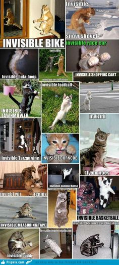 Invisible Cat Collection