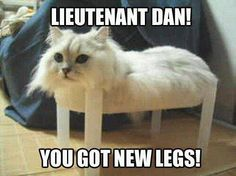 Forest: what are you doing here Lieutenant Dan? Lieutenant Dan: I wanted to spread my sea legs. Forest: But you aint got no legs Lieutenant Dan. BAHAHHAHAHAHH my fav part of Forest Gump! xD this is the best! Haha Funny, Funny Cute, Funny Memes, Cat Memes, Funny Stuff, Funny Drunk, Cats Humor, That's Hilarious, Dog Cat