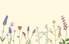 Variety of Wild Flowers Vector Illustration | Free Image by rawpixel.com