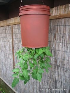 DIY upside down tomato (or strawberry) planter. I think these will hang under the deck. (And you can plant annuals in the top to make it look nice).
