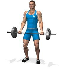 BARBELL CURL INVOLVED MUSCLES DURING THE TRAINING BICEPS