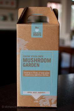 mushroom growing kit!