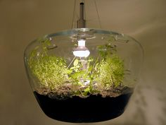 green house lamp