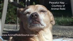 Reiki brings peace to our animals and to the world!