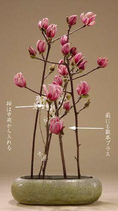 華道専慶流WEBいけばな講座 木蓮の現代花
