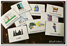 Parts of a cell flashcards; I like the cell parts rap too Science Cells, Stem Science, Science Biology, Teaching Biology, Life Science, Science Resources, Science Lessons, Science Activities, Science Ideas