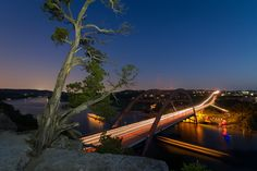 The Tree Over the Pennybacker Bridge by Tim Stanley