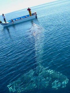 this would be a dream come true, to touch a whale!!!!!! But also kinda scary....