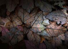 Quiet fall | Flickr - Photo Sharing!
