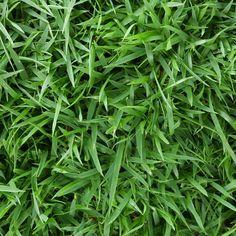 Yard Tool Planting Garden Soil Lawn Harmony Zoysia SOD Plugs 36 Count Trays for sale online Grass Seed For Shade, Best Grass Seed, Hardscape Design, Sprinkler, Zoysia Sod, Sod Grass, Zoysia Grass Seed, Centipede Grass, Lawn
