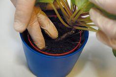 Čo potrebujú jednotlivé druhy izbových rastlín, aby sa im darilo? Planter Pots