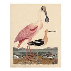 Audubon Birds, Art Deco Posters, Shorebirds, Pink Bird, White Doves, Bird Illustration, Early American, Antique Prints, Bird Art