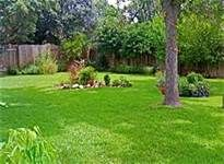 8 Simple Tips to go Green & Natural in your Yard & Garden on a Budget!