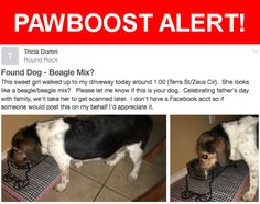 Is this your lost pet? Found in Round Rock, TX 78665. Please spread the word so we can find the owner!  I'm posting for someone in this area Tricia Duron who made a post on Next Door but did not leave contact info. See her posting above. Female beagle mix.   Near Zeus Cir & Terra St