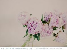 Peonies or Cabbage Roses. I don't care. Wedding Photography Inspiration, Wedding Inspiration, Cabbage Roses, Natural Light Photography, Wedding Album, Pretty Pastel, Peonies, Tea Party, Wedding Flowers