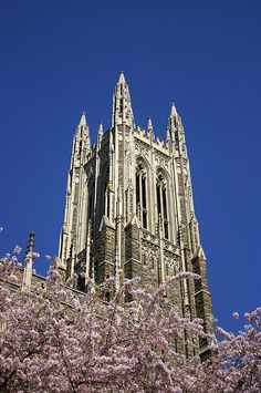 Duke Chapel rises above flowering cherry trees in spring on the campus of Duke University in Durham, North Carolina. Photography by Jill M. Davis. #Duke #DukeChapel #Spring #Durham #NC #Art #Photo