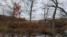 Boundary Creek Natural Resource Park- Moorestown, Nj.