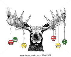 funny Christmas card moose design of hand drawn winter scene of big animal face, cute humorous Christmas tree ornaments on antlers, vector illustration Christmas card, fun happy Christmas humor sketch