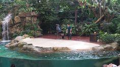 Splash Safari show at Singapore Zoo, just don't sit too close - you might get soaked! Singapore With Kids, Singapore Zoo, Safari, Explore, Outdoor Decor, Exploring