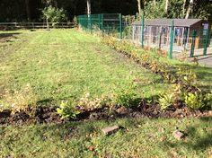 New hedge, new areas in the Hopwood garden