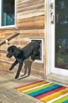 Choosing prefab housing didn't stop Debbi Gibbs from personalizing her lakeside home; she even had room to add a poodle-sized exit. Photo by Mark Mahaney.