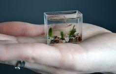 Tiny Fishtank by Anatoly Konenko holds 10ml of water and 2 baby Danios fish! #Fish_Tank #Anatoly_Konenko