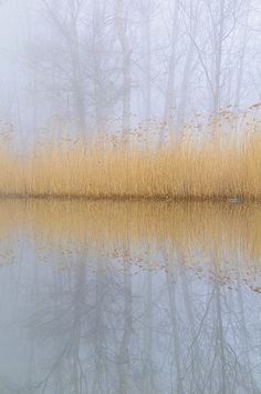 Foggy reflection by Marco Barone