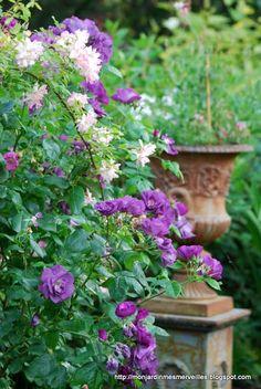 Mon Jardin Mes Merveilles: One shot : In blue...