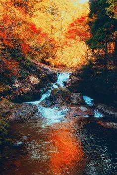 Autumn dream-秋之夢 by Hanson Mao(毛延延) - Photo 126442147 - 500px