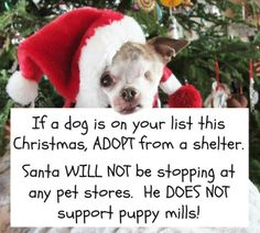 If a dog is on your list this Christmas, ADOPT from a shelter or a rescue. Santa WILL NOT be stopping at any pet stores. He DOES NOT support puppy mills! Shelter Dogs, Animal Shelter, Rescue Dogs, Animal Rescue, Shelters, Stop Animal Cruelty, Puppy Mills, Animal Welfare, Pet Store