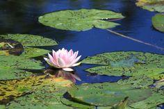 E un altro #buongiorno fiorito, anche dal giardino di Monet! #francia