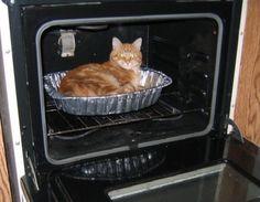 Ter um animal de estimação ainda pequeno é vivenciar uma situação diferente todos os dias. Neste sentido o site norte-americano Distractify selecionou 29 imagens de gatos pequenos que se escondem nos mais diferentes objetos da casa.