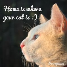 """""""Home is where your cat is"""" love this quote and it's true"""