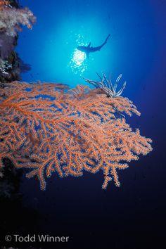 Palau underwater photo with shark, by: Todd Winner