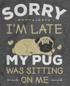 Pugs, Join, Friends, Amigos, Pug Dogs, Pug, Boyfriends, True Friends