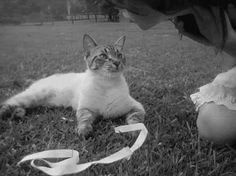 Black And White Photo:  This Photo was uploaded by amyjayne10. Find other Black And White pictures and photos or upload your own with Photobucket free im...