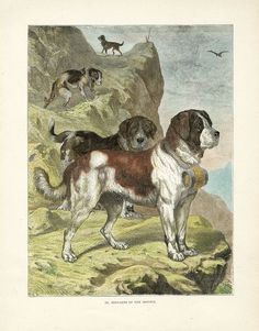 Shaw & Cassell Illustrated Book of the Dog 1890