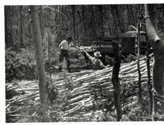 "Unidentified photographer, ""Maria Chabot (left) Supervising the Cutting of the Aspen Poles,"" 1947. Contemporary photographic print, 5 x 7 in. Georgia O'Keeffe Museum. Gift of Maria Chabot. RC-2001-002-053a. Copyright Georgia O'Keeffe Museum."
