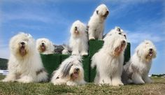 the dulux dog - Google Search